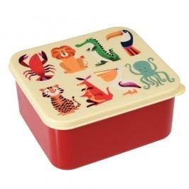 Cutie pentru alimente Rex London Colourful Creatures